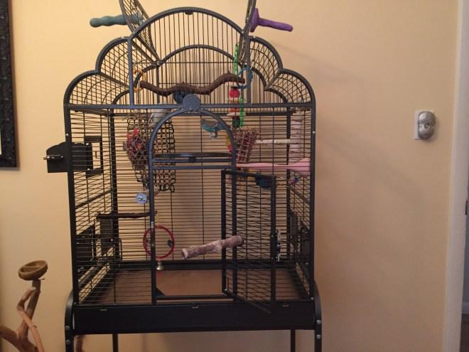 new parakeet quarantine