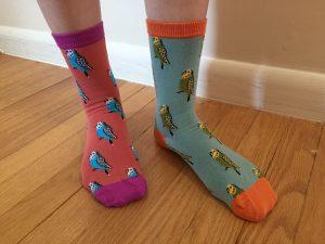 budgie socks!