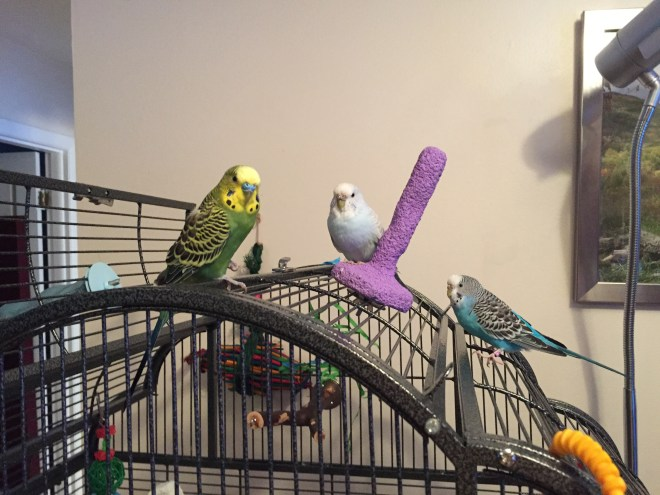 still considering moving the flock