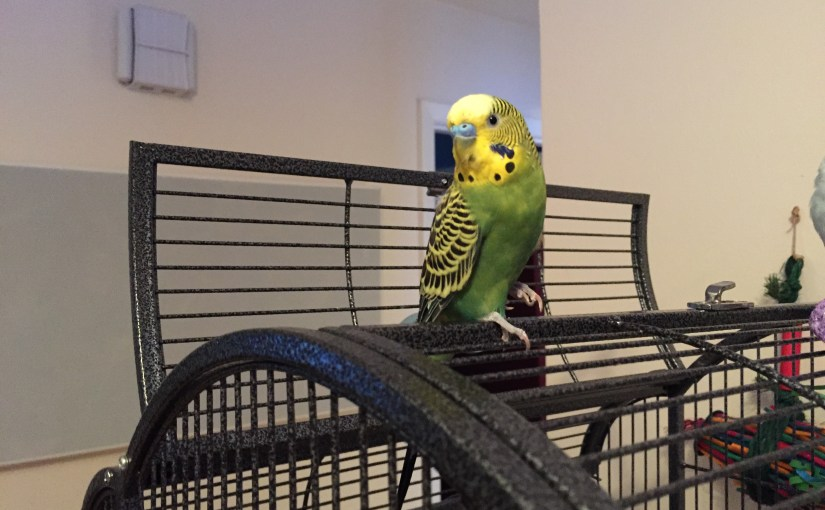 budgies and anxiety