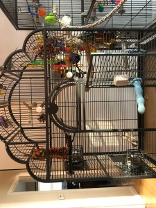 HQ Victorian flight cage for parakeets