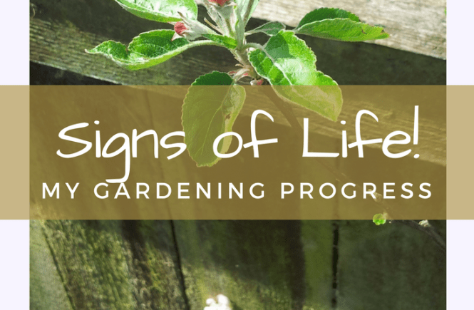 Signs of life in my new garden at last - here are my gardening plans and progress so far.