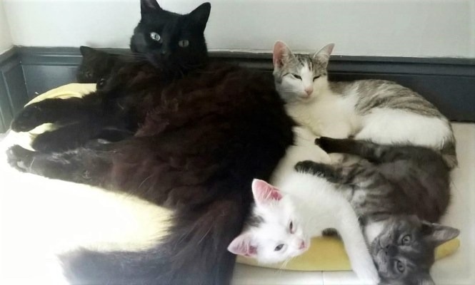 All five of my cats together for the first time.