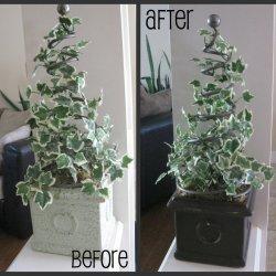 Topiary Revamp