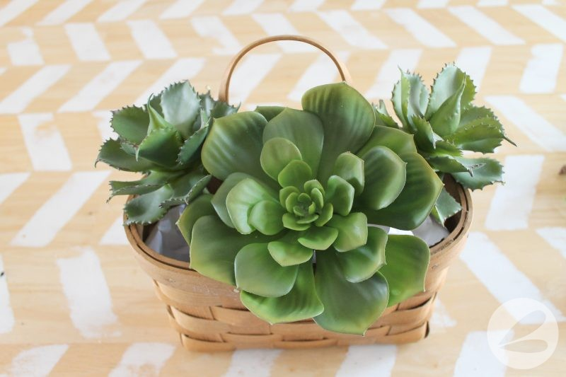 Succulent Wall Hanging
