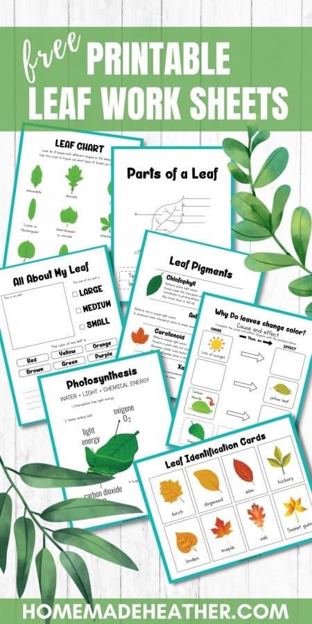 Leaf Printable Work Sheets