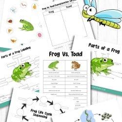 Frog Printable Activity Sheets