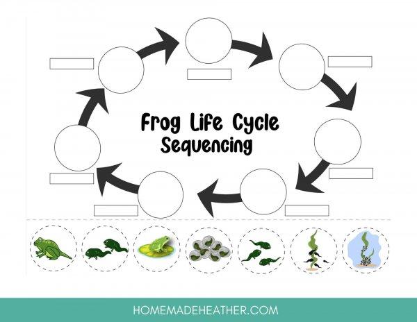 frog lifecycle work sheet