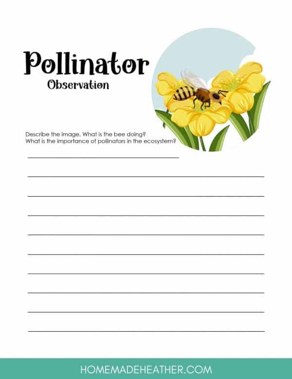 Flower Pollination Work Sheet