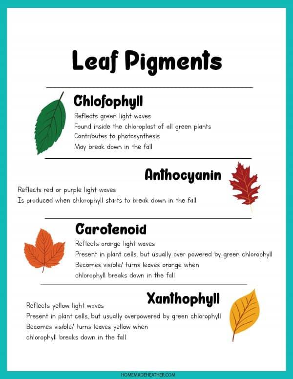 Leaf Pigments Printable