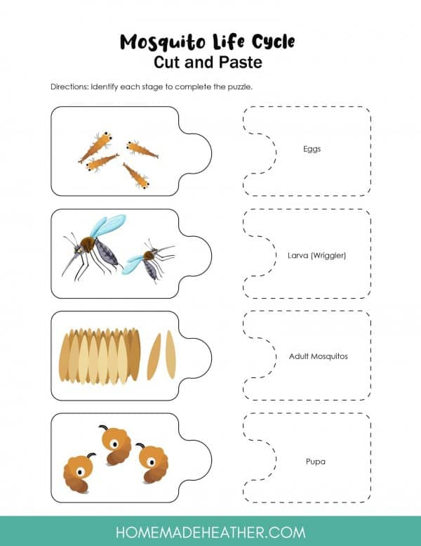 Mosquito Life Cycle Activity Printable