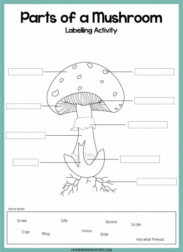 Mushroom Parts Work Sheet