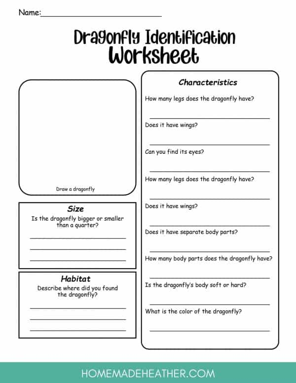 Dragonfly Worksheet Printable