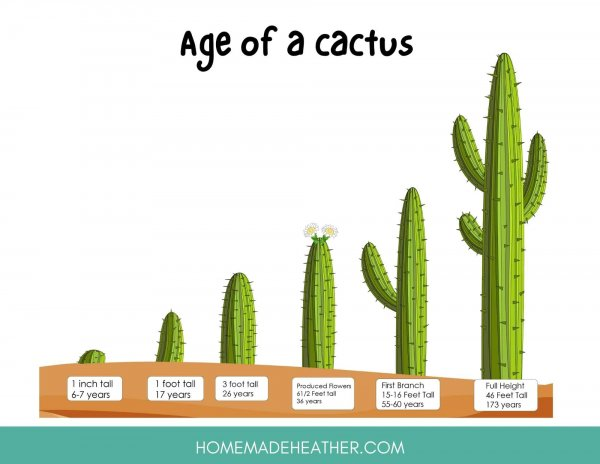 Age of a Cactus Printable