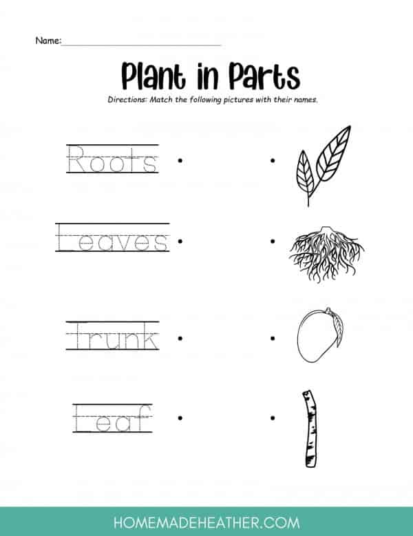 Tree Parts Printable