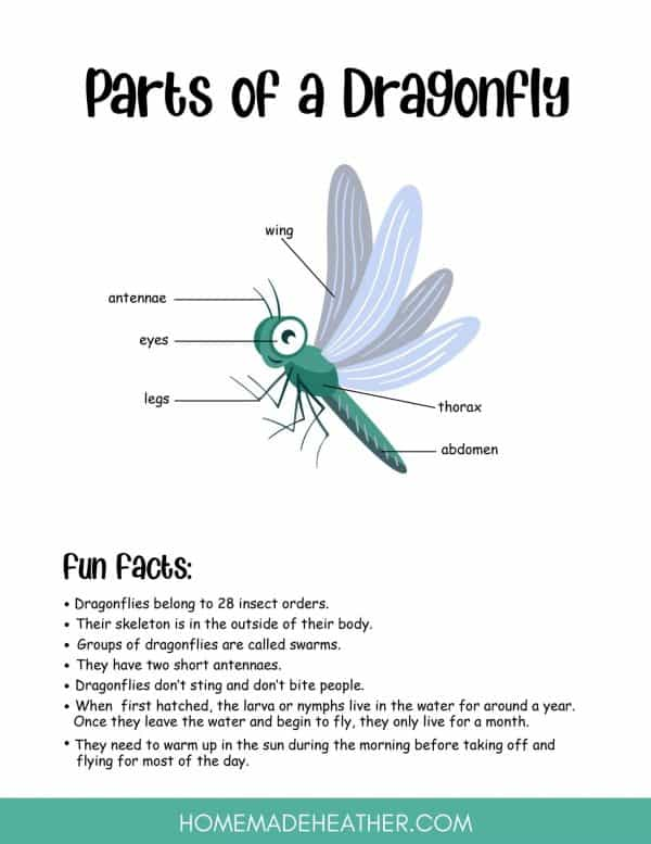 Free Dragonfly Printables