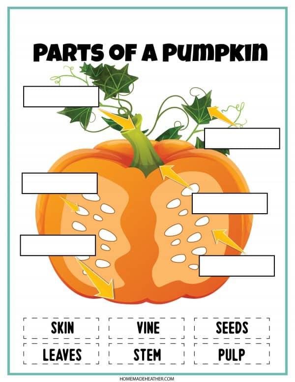 parts of a pumpkin printable