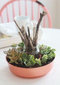decorating with succulents - Design Decoration