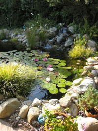 diy-backyard-pond-decoration