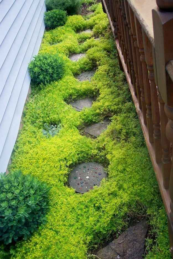Diy Path Growing Ground Cover