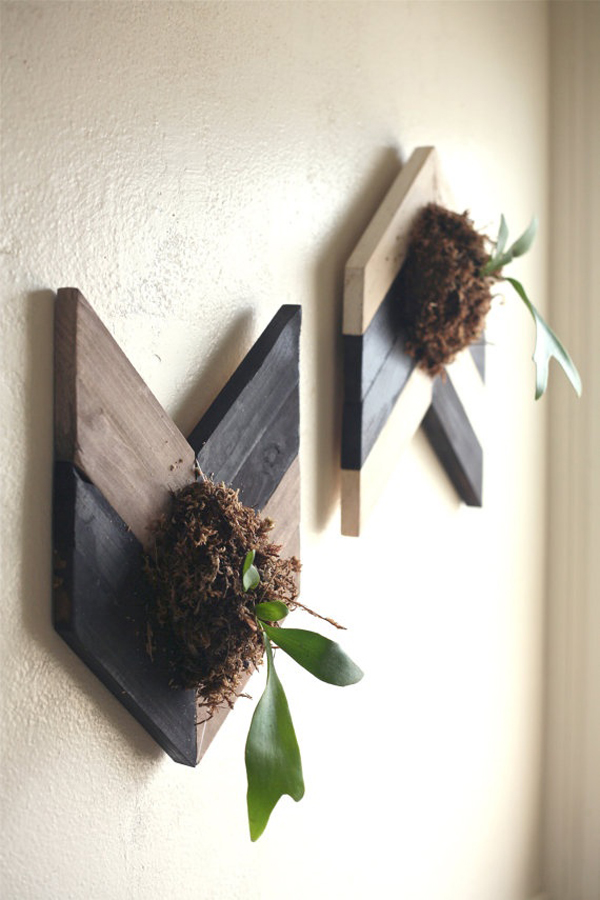 20 Fresh And Natural Decorations With Staghorn Fern  Home