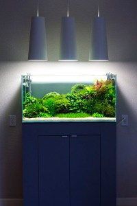 blue-small-aquarium-designs