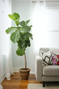 20 Modern Indoor Garden With Scandinavian Style | Home ...