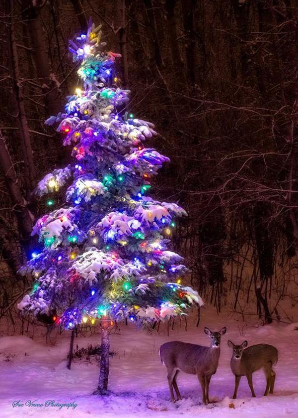Christmast Decor Skedaddlewildlifecontrol