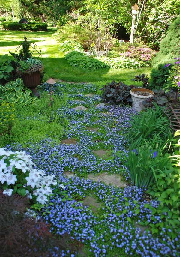 beautiful plants and ground