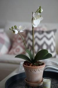 Orkide från Mr Plant