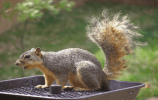 Top 10 Best Squirrel Feeders Reviews – Check Our Top Picks 2018