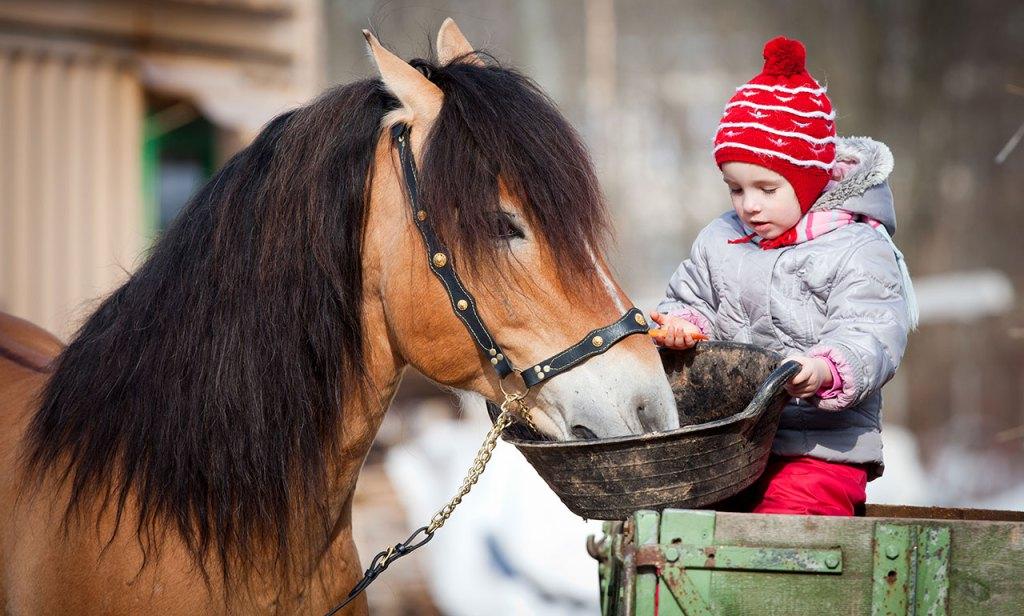 Alimentation du cheval par un vétérinaire.