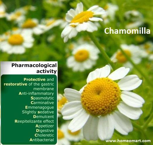 Chamomilla - Homeopathic pharmacological activity