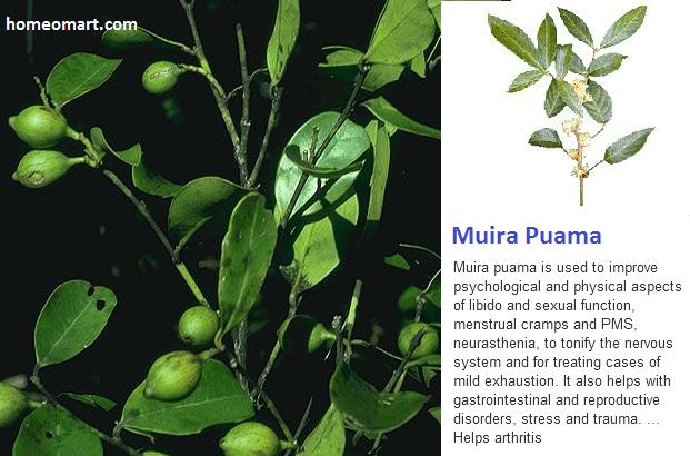 Muira Puama - nerve tonic, libido enhancer