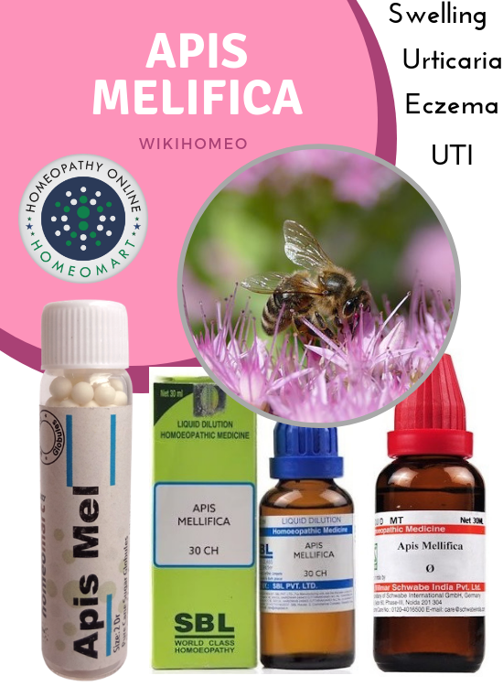 Apis melifica homeopathy medicines mother tincture dilution pills