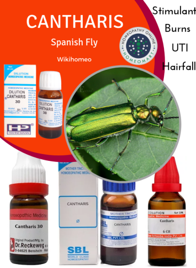 Cantharis Spanish fly homeopathy medicines