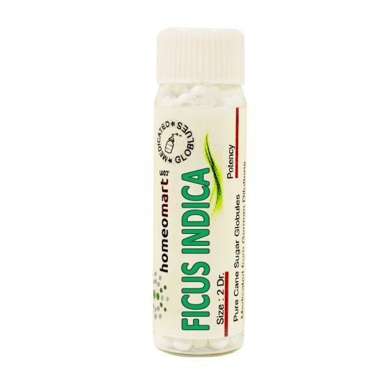 Ficus Indica Homeopathy 2 Dram Pellets 6C, 30C, 200C, 1M, 10M