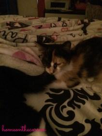 Amelia and Target sleeping