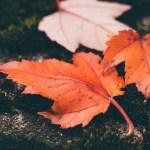 季節の変わり目に体調を崩すのはなぜ?対策は?