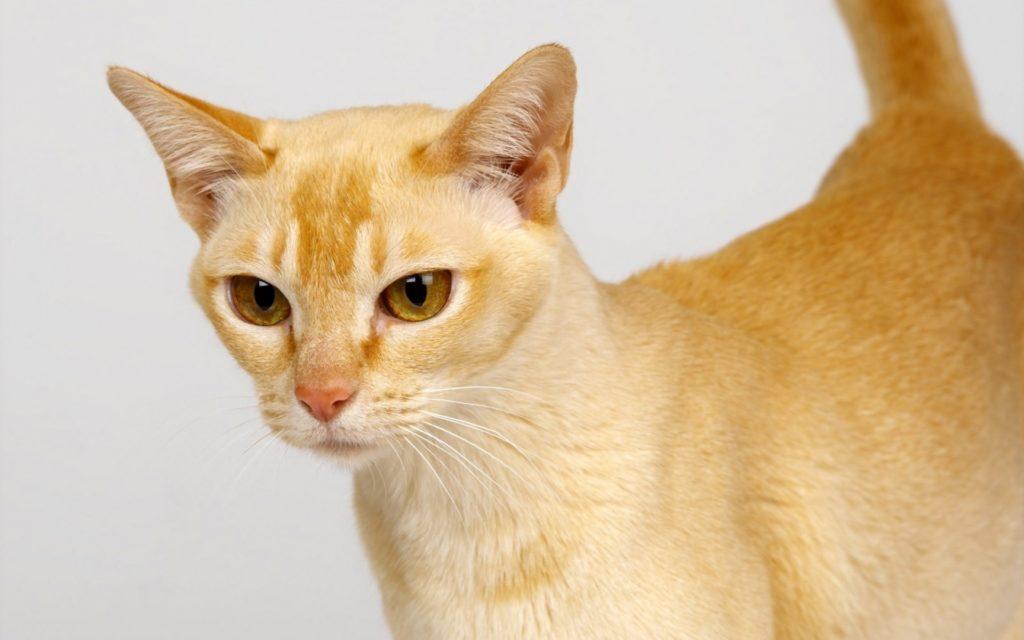 Dospievajúci nohavičky mačička