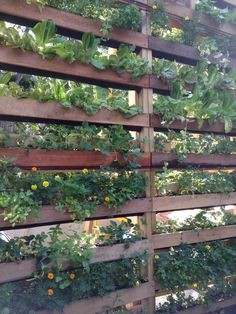 DIY – Make your patio private with screens you create yourself