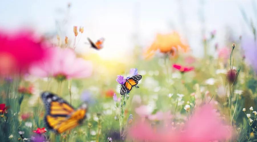 Attracting Butterflies and Hummingbirds to Your Garden