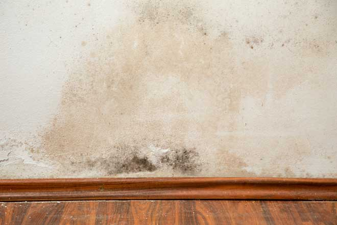 Mold and Mildew Buildup on House Wall