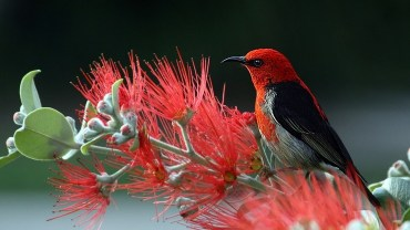 birds-that-eat-mosquitoes-and-bad-garden-bugs