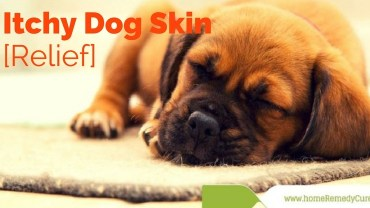 home-remedies-itchydog-skin-relief