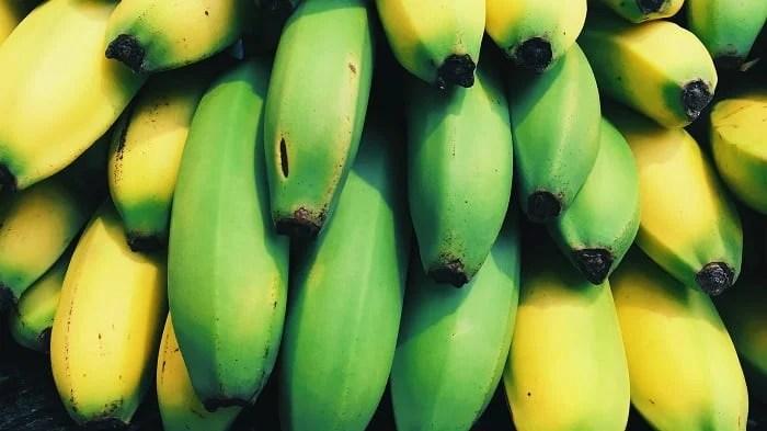 Bananas verdes não maduras