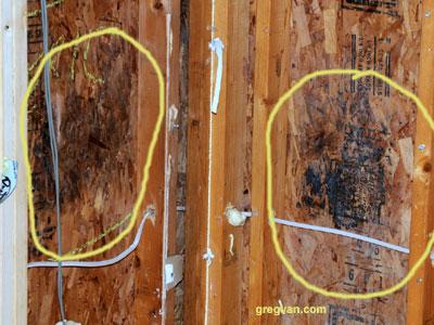 Mold Behind Shear Wall