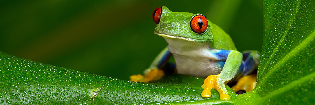 Eat a live frog first thing in the morning.