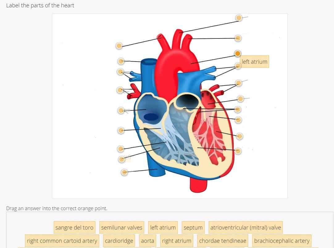 heart diagram quiz 8n ford tractor wiring goconqr online tools to meet homeschool needs