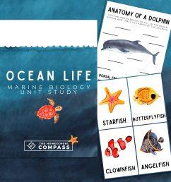Free Ocean Life Marine Biology Printable Pack - Homeschool Compass [ 8000 x 8000 Pixel ]